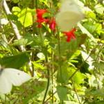 flower1-150x150.jpg