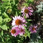 flower2-150x150.jpg