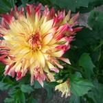 2012-07-21-10.54.05-150x150.jpg