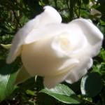 Artha Yoga flower3