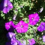 2012-07-21-15.14.14-150x150.jpg