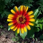 flower4-150x150.jpg